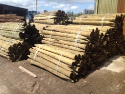 Treated fencing posts