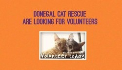 Donegal Cat Rescue Volunteers Wanted