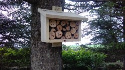 GLAS: Bird, Bat and Bee Boxes