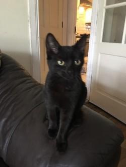 Black kitten girl