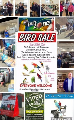 Dromore Cage & Aviary Bird Sale