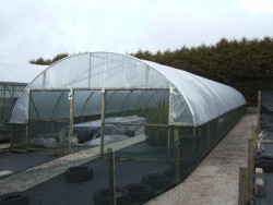 Polythene cover for greenhouse Tunnel