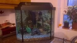 CORNER FISH TANK AND FISH