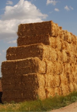 8/4/4 bales of wheat straw