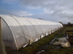 green house /poly tunnel