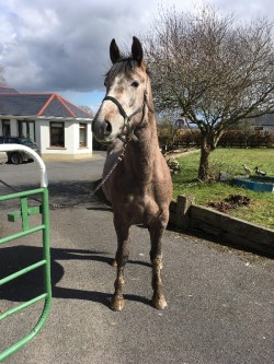 Very quite well bred 3 Y.O filly