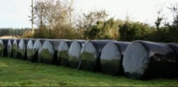 Dry Bales Of Silage