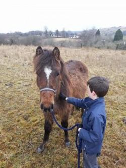 Staillion Pony