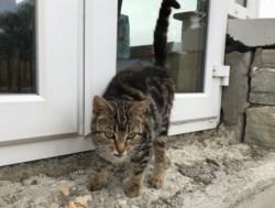 Free 1 year cat