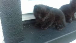 sweet little kitty baby boy to give away to new good home!!