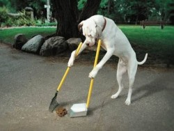 Dog home clean up service's