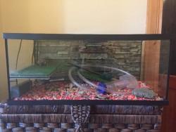 Terrapin tank