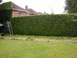 Landscaping and property maintenance tree care