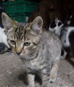 Kittens for free to good home