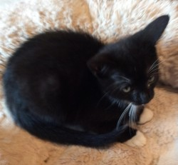 Willow needs a loving home
