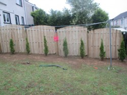 fencing thuja planting