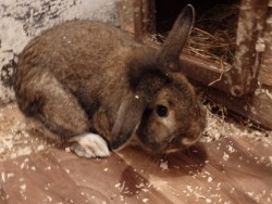 Dean, the rabbit needs a loving home
