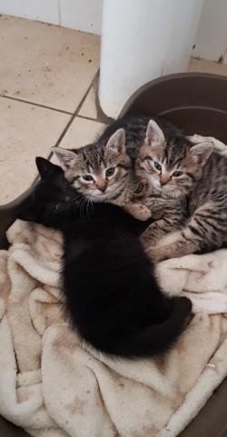 3kittens