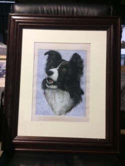 Picture of collie dog