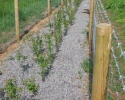 EFS Scheme Hedging Plants