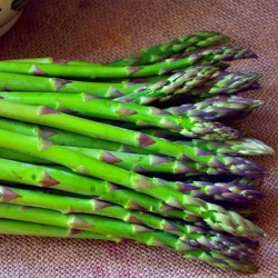 Asparagus 1st Year Crowns - Connover's Collossal