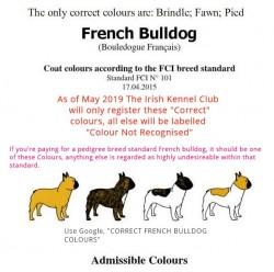 Breed Standard French Bulldogs, Buyer beware!