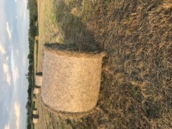 shed stored round bales of hay