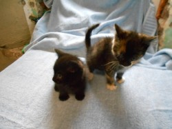 Two kittens free to good home