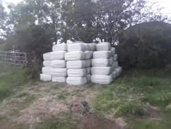 Bales of haylage
