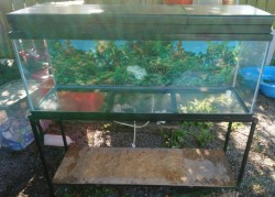 Large glass tank