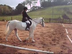 Horse/pony wanted