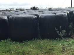 Silage 50 Bales for sale €15