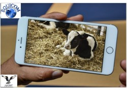 Farm Calving Camera - View on your Mobile Phone