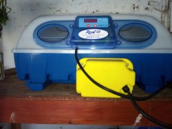 Incubator's for sale,