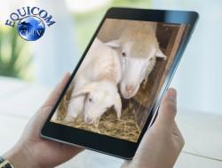 Lambing Camera for Sale