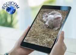 Calving Camera - Farm Camera