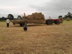 Hay, Haylage for sale