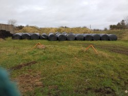 Bales of Oaten silage for sale