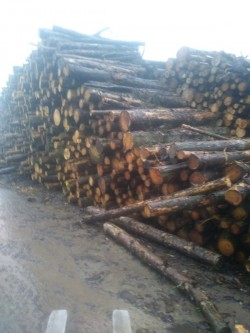 Wanted lorry loads of lengths of hardwood