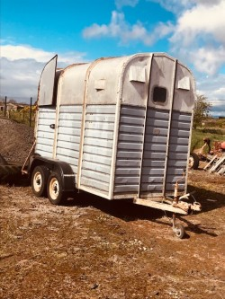 Laurie Horse Box.