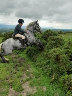 13.2hh. Steel Grey Pony