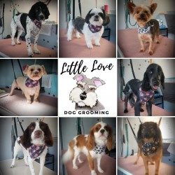 Professional Dog Grooming services @ LittleLoveDogGrooming