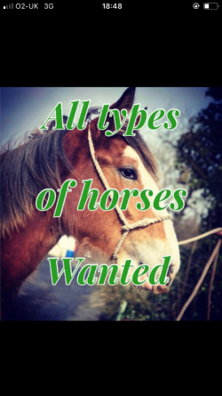 All types horses /ponies /donkeys wanted