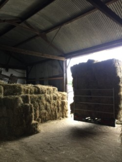 Small square bales hay &straw