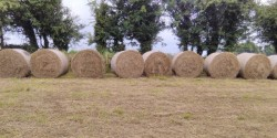 Round Bales for sale (haylage & silage)