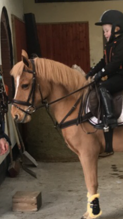 12.2 beginners pony  for sale