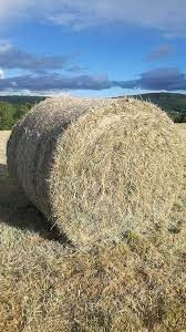 Hay and Silage Bales