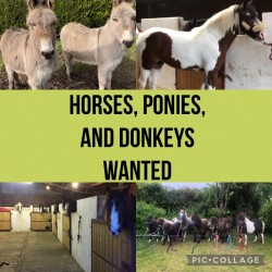 HORSES PONIES AND DONKEYS WANTED