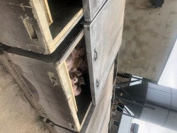Pig Boxes