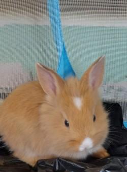 Baby rabbits bunnies